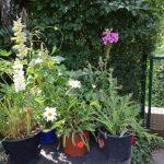 Nachrichten aus dem Garten