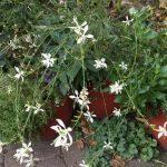 In Gedanken in meinem Garten-Roussillon Nr. 6