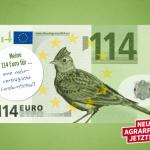 Mohn,Kornblumen und Kamille- was hat das mit Europa zu tun?